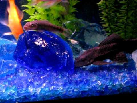 Tumbled recycled glass aquarium gravel Recycle Glass Ideas Pinter ...