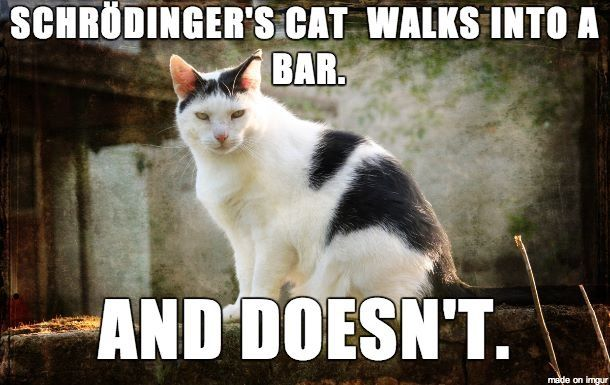 Schroedinger's Cat | Makes me laugh | Pinterest