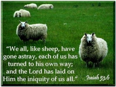 Isaiah 53:6   WE ALL LIKE SHEEP HAVE GONE ASTRAY . . . .