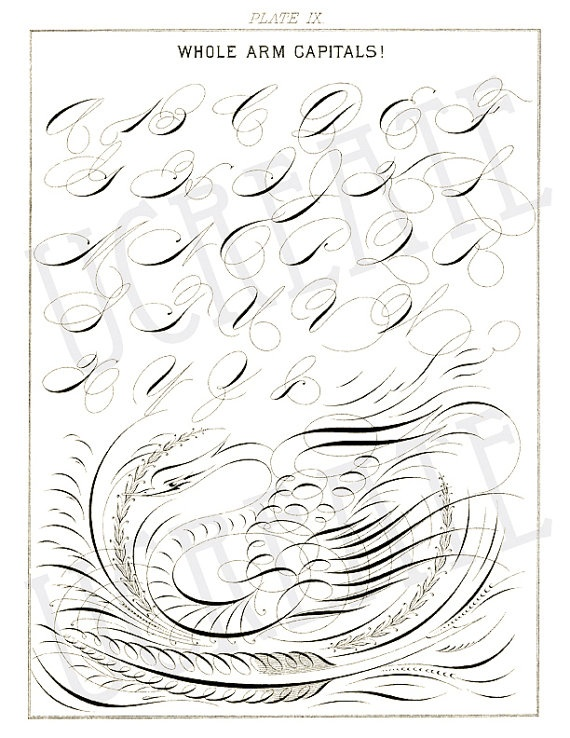 Spencerian Calligraphy Ephemera Paper 8 5 X 11 300dpi