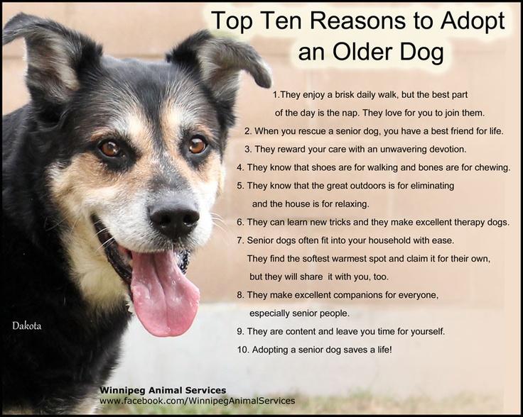Adopting Senior Shelter Dog