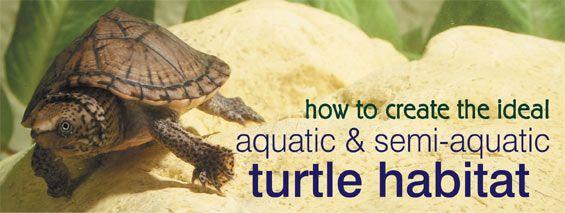 How to Create the Ideal Aquatic and Semi-Aquatic Turtle Habitat