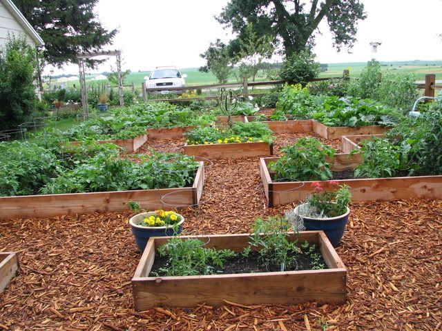 great raised garden garden ideas pinterest
