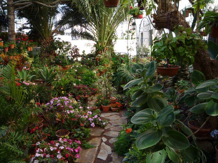 jardin flores  El Jardín de los Pasos Cortos...  Pinterest