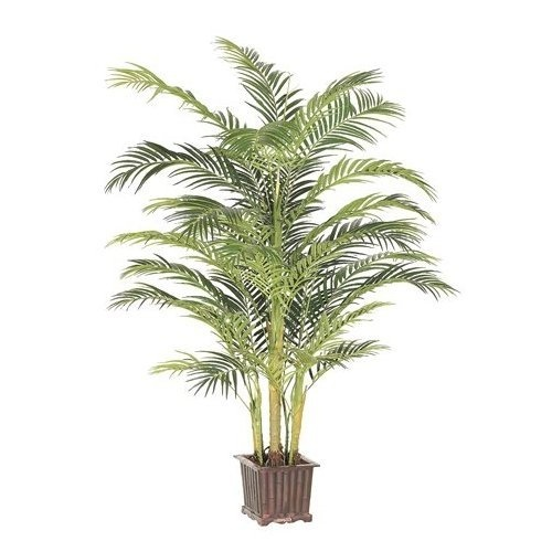 Areca palm tree for the home for the home pinterest for Pictures of areca palm plants