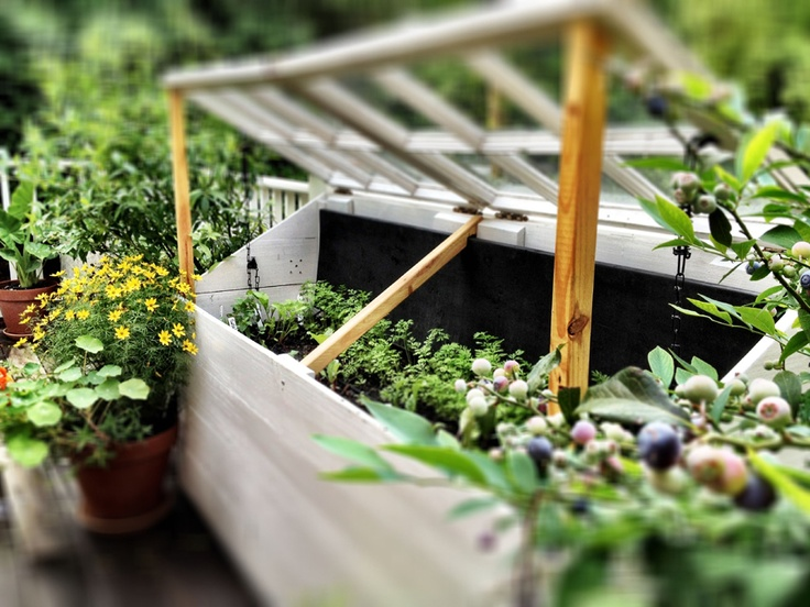 Backyard Urban Farm Company : gardens
