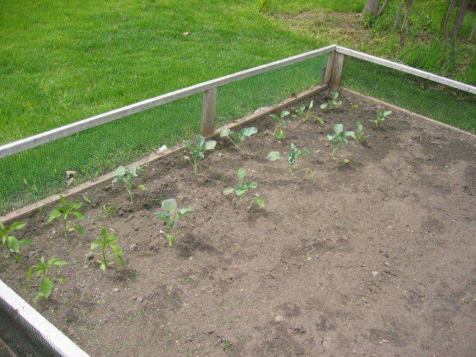 Backyard food gardens - Easy Garden Fence Ideas Small Garden Fence With Design Rooms Attract