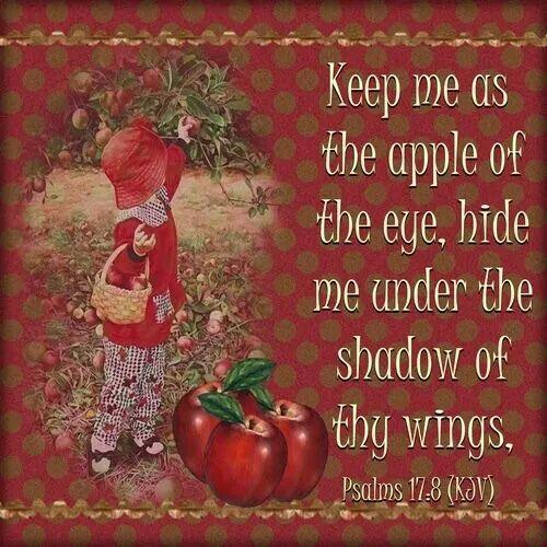 psalm 17:8 kjv