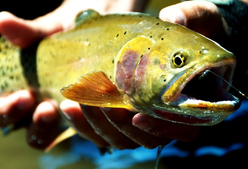 Fish Things That Make Me Giggle Pinterest