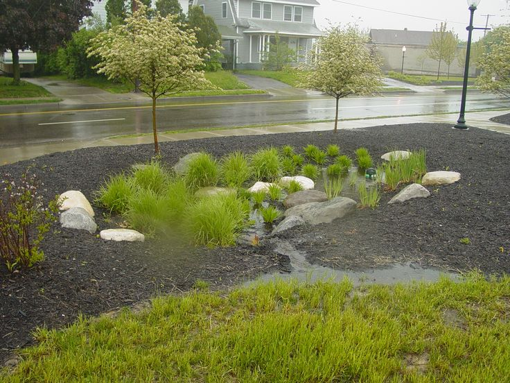 Rain garden ideas for Ideas for landscaping my garden