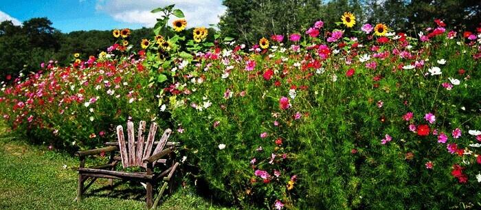 Georgia wildflower garden wildflowers i love for Wildflower garden designs