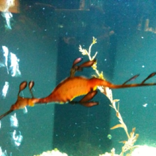 Birch Aquarium San Diego Ca Ocean Life Pinterest