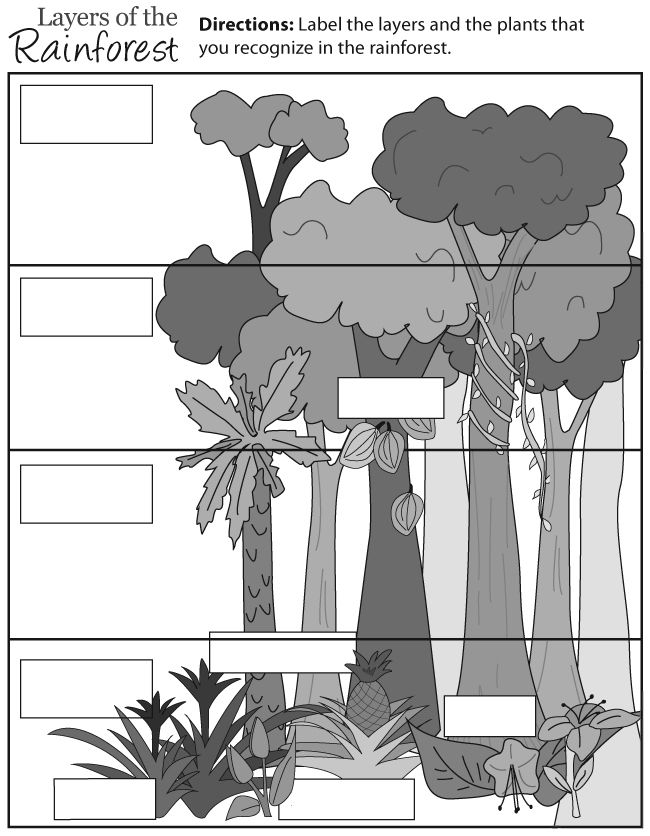 Rainforest Layers Education Ideas Pinterest Rainforest Layers Coloring Page