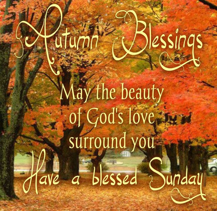 PSALM  5:12 -  You bless righteous people,  O Lord.  Like a large shield,  you surround them with your favor.  -   Wishing everyone a blessed day and a Happy Autumn everyone!