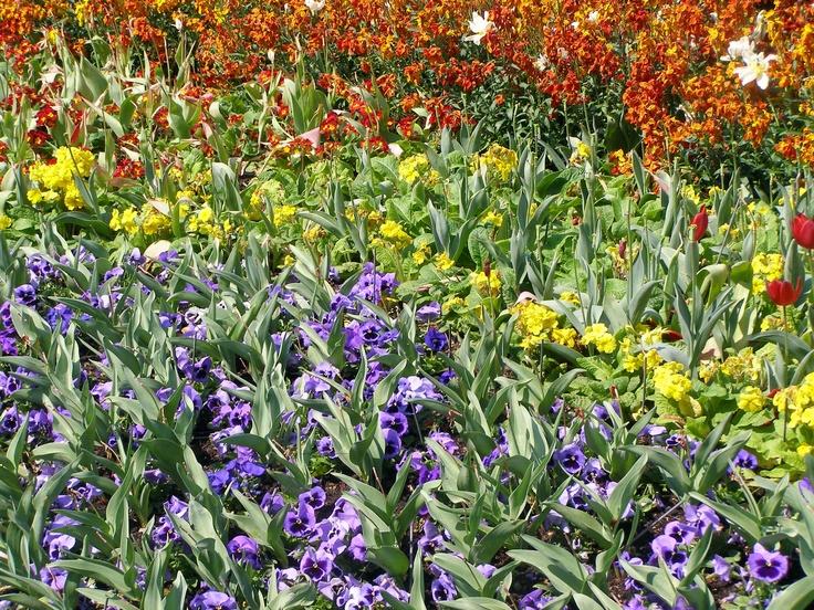 Jard n de flores flores de colores pinterest for Catalogo de flores de jardin