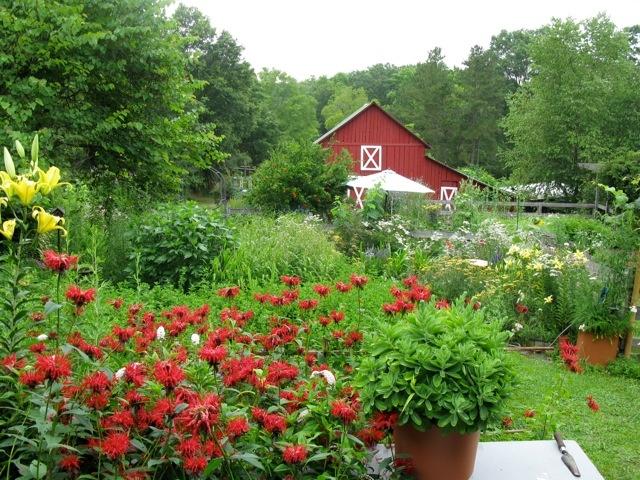 Backyard Flower Farmer : beautiful farm flower garden  farm chick chic  Pinterest