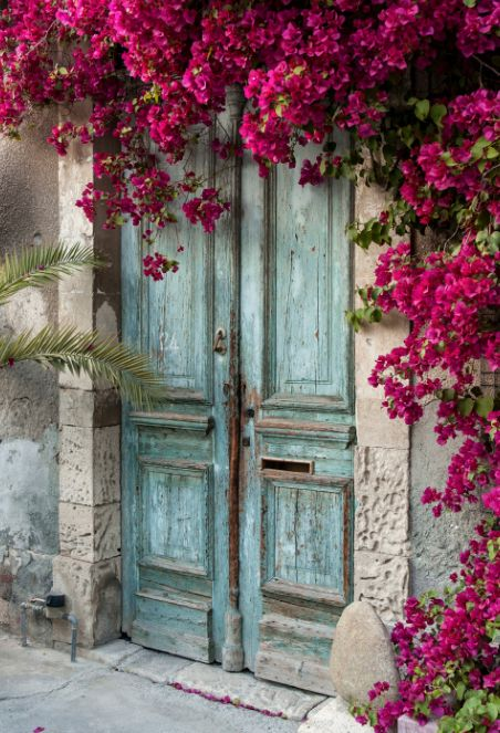 Blue weathered door draped with fuchsia flowers