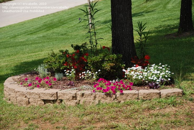 Tree flower bed lawn n garden pinterest for Small trees for flower beds