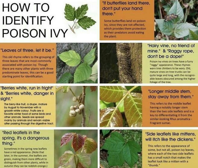 Top tips for poison ivy, oak and sumac | Earth | EarthSky