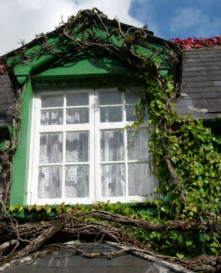 More like this: irish lace , lace curtains and ivy .