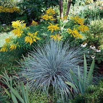 Best ornamental grasses for midwest gardens for Perennial grasses full sun