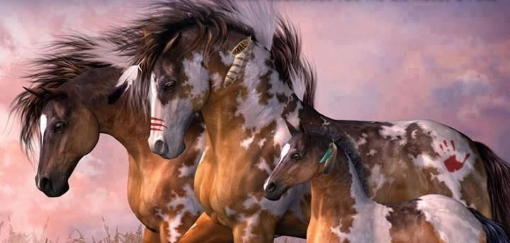 Indian horses indian things pinterest - Indien et cheval ...