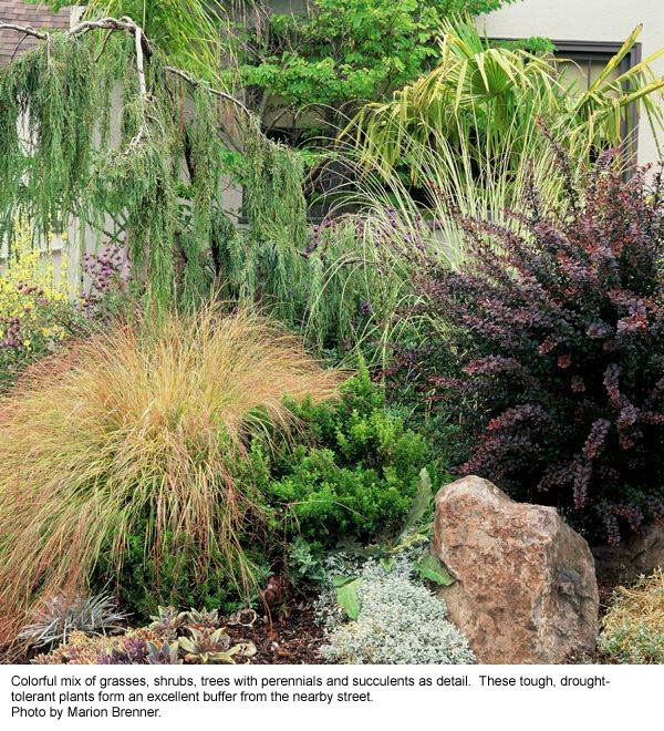 Drought tolerant plants for Drought tolerant trees