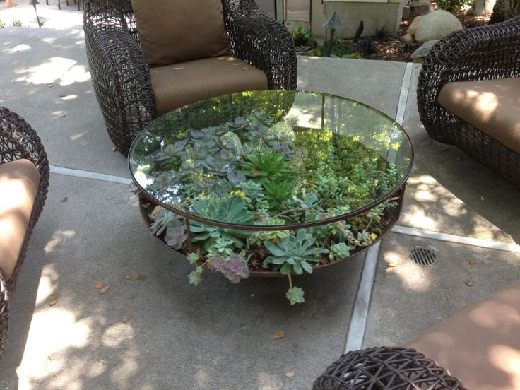 succulent coffee table balinese garden pinterest