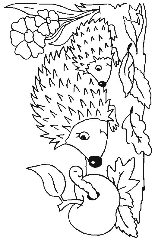 Coloring pictures of animals that hibernate : Hedgehog coloring pages animals in hibernation