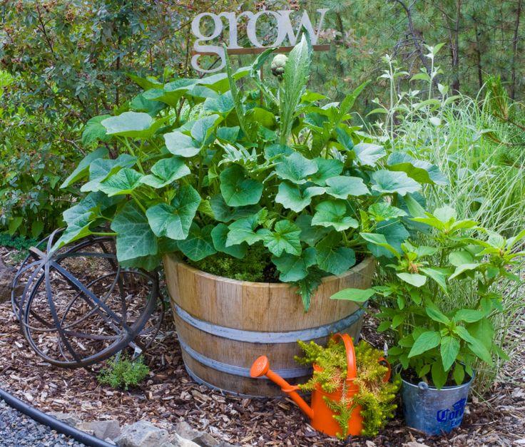 Wine barrel veggie garden garden pinterest