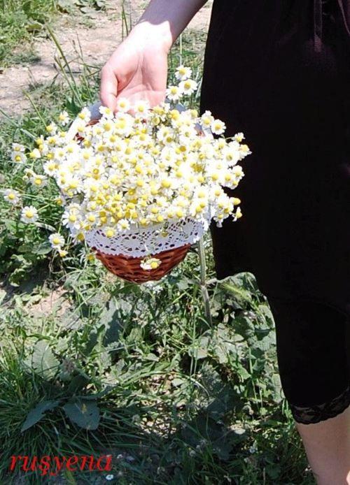 Daisy basket spring has sprung pinterest