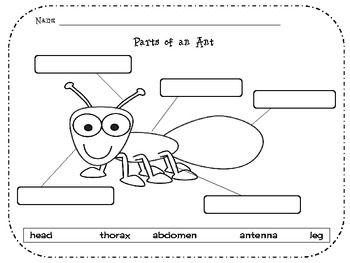 label ant parts worksheet bing images. Black Bedroom Furniture Sets. Home Design Ideas