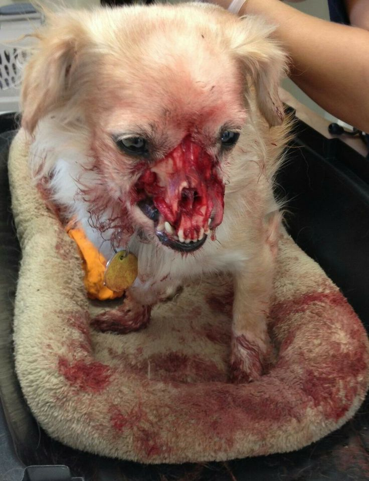 This poor pup s face was chewed off by another dog