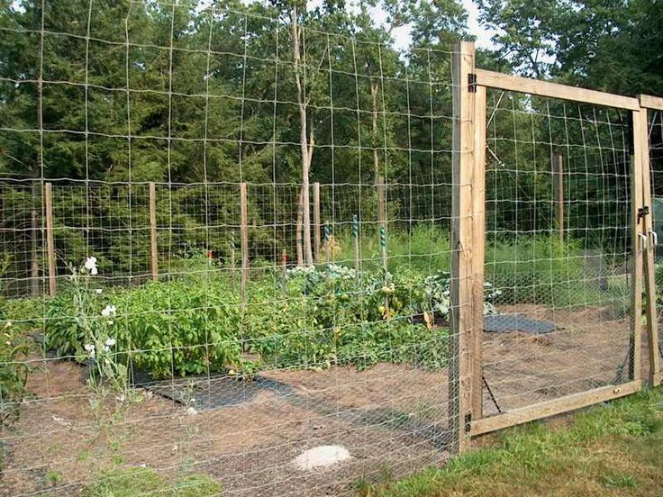 Vegetable Garden Fence Garden Pinterest