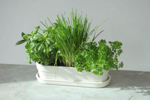 Ceramic Indoor Garden Or Window Box Herb Planter Normally 45