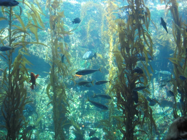 Birch Aquarium La Jolla Ocean Life Pinterest