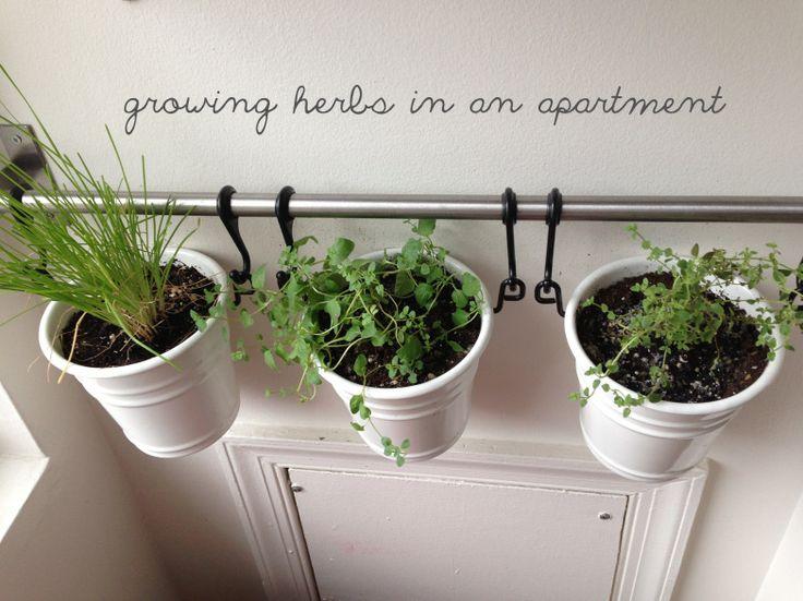 apartment herb garden using ikea fintorp system