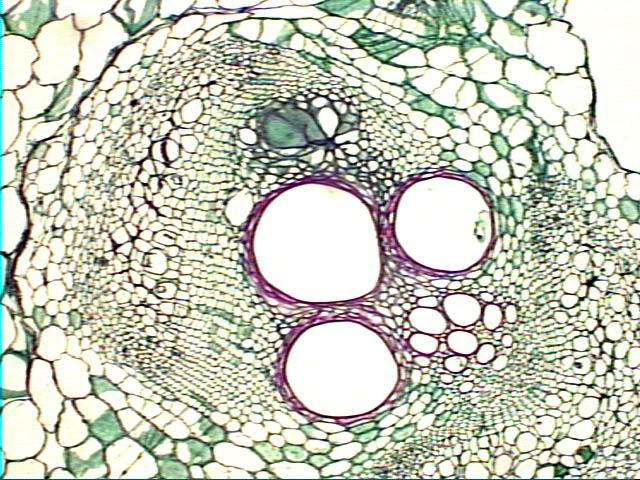Search Plant Cell Picture