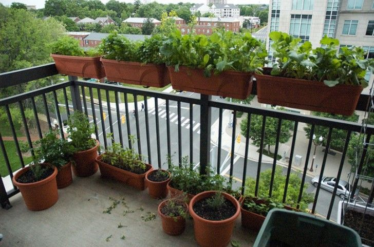 balcony herb garden ideas gardening pinterest