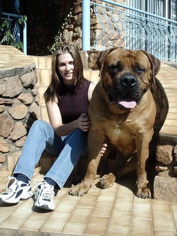 Rare Large Dog Breeds Rare dog breeds