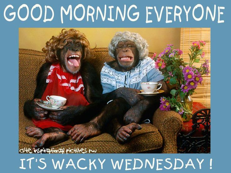 Wacky Wednesday | Wacky Wednesday | Pinterest Wednesday Coffee Quotes
