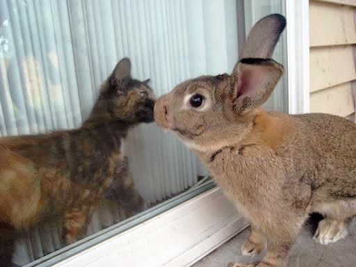 Cat Rabbit Video