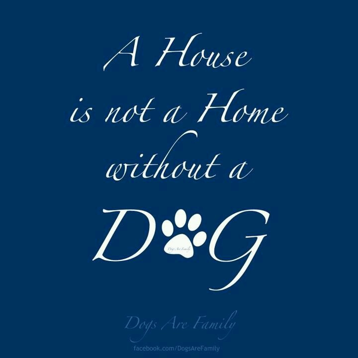 House is not a home without a dog quotes phrases and funnies p