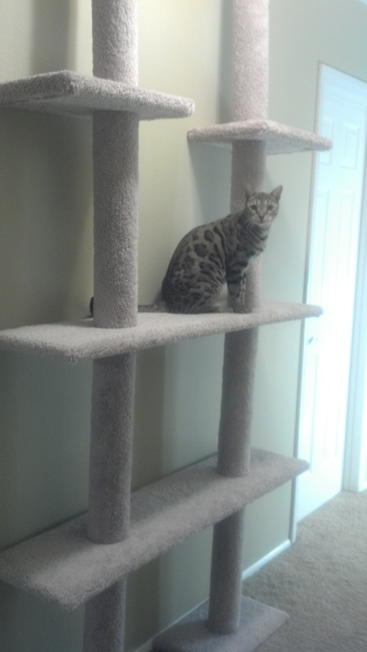 Walmart Cat Climber Bought 2 Of These Towers Removed 2 Small Middle Shelves Replaced Them