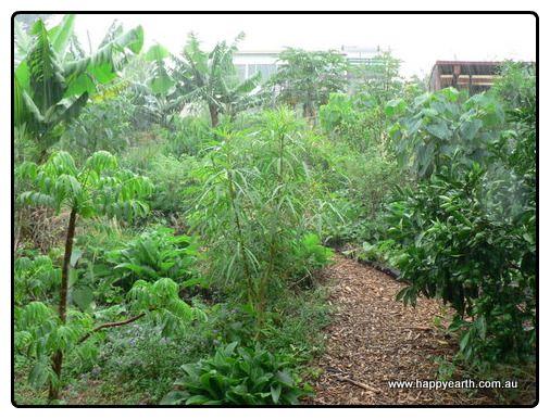 Food Forest Garden  Garden Goodies  Pinterest