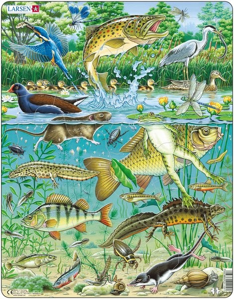 Pond creatures pond life pinterest for Pond animals