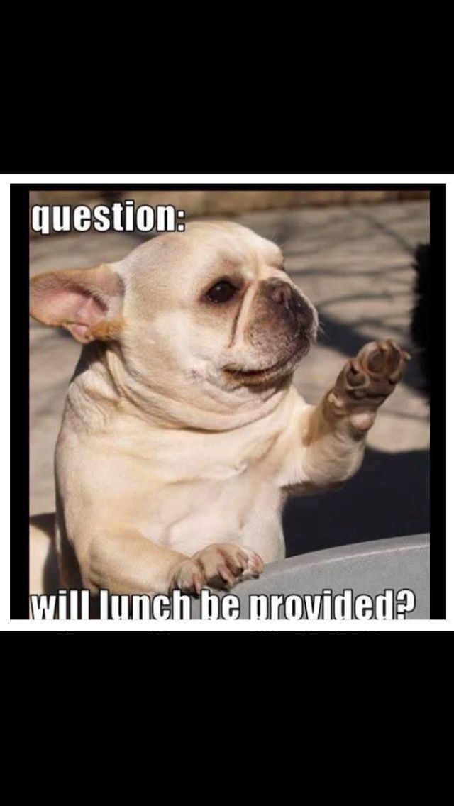 Funny French bulldog  Furry babies  Pinterest