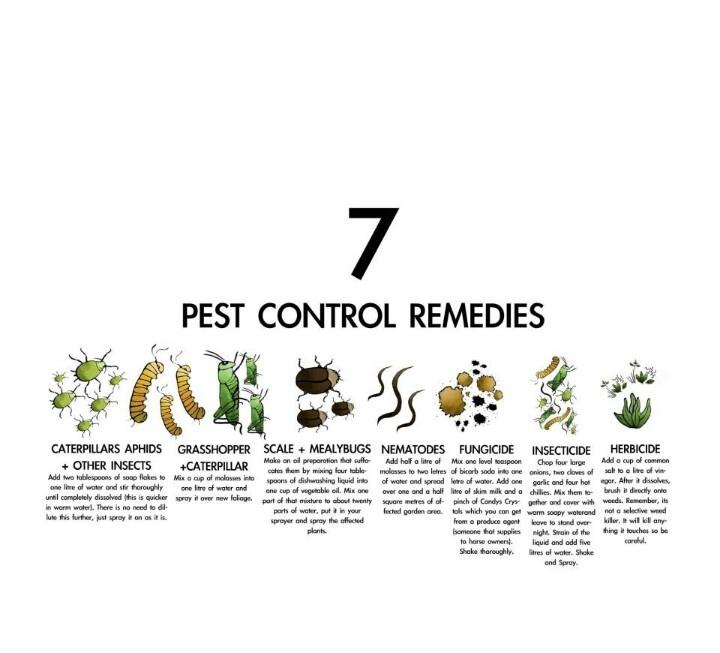 Natural Pest Control Remedies Pest Control Pinterest