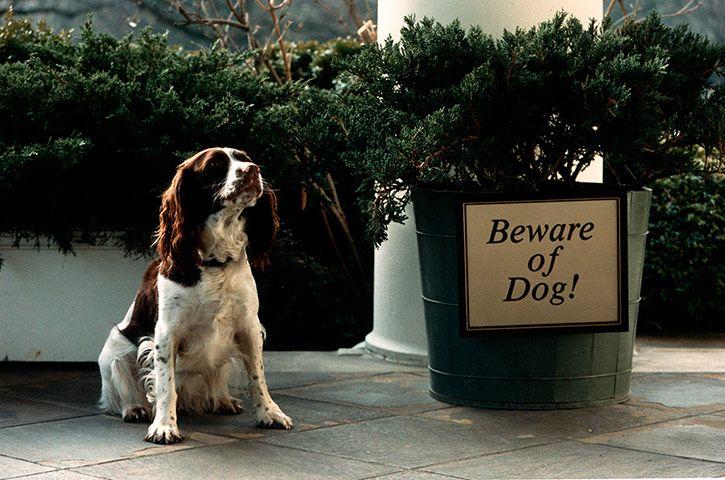 Σεβάσου το σκύλο...