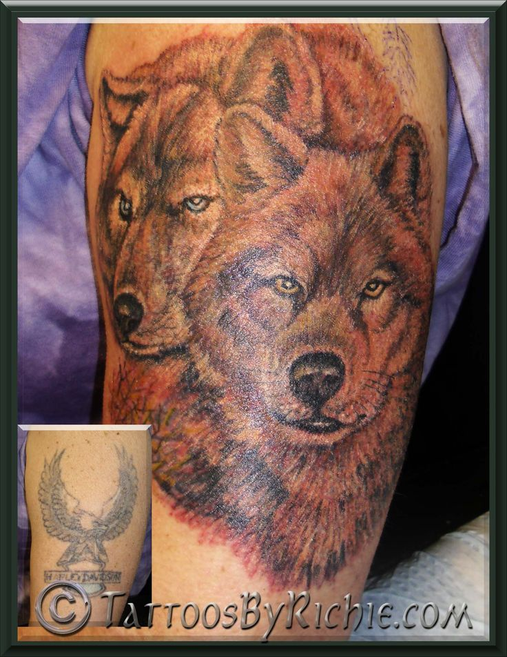 Wolf tattoo cover up tattoo nightmares cover up tattoos for Is tattoo nightmares still on